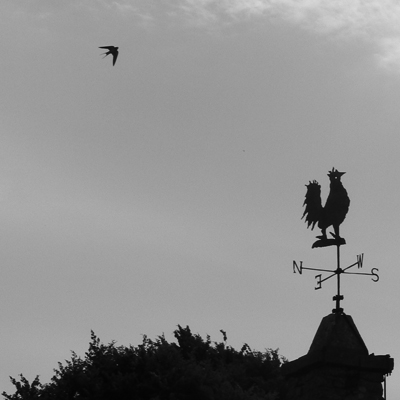 Swallow and Weathervane